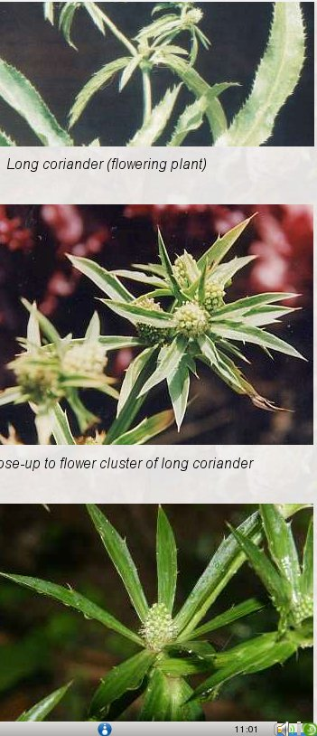 Andu-kola plant