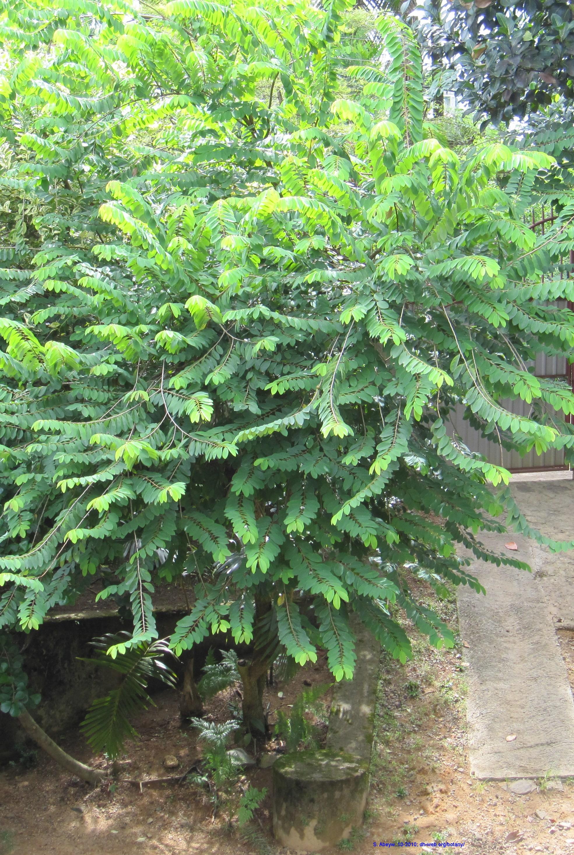 Botany Plant-names → Sinhala Plant names උද්භිද